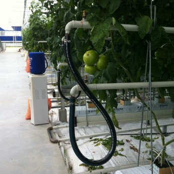 Pomidor 2 HA